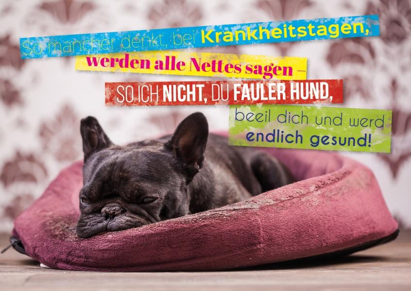 fauler hund gute besserung echte postkarten online. Black Bedroom Furniture Sets. Home Design Ideas