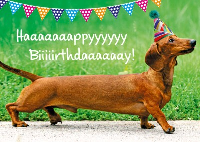 dackel hund happy birthday geburtstags postkarte grusskarte