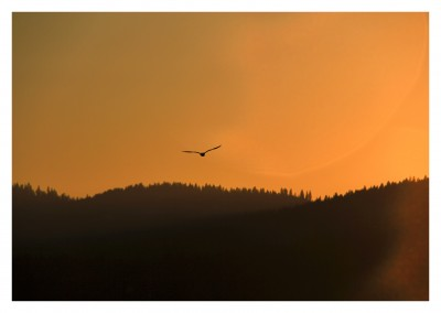 photo of a bird flying over mountains at sundown