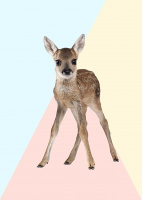 Kubsitika Bambi with triangle graphic